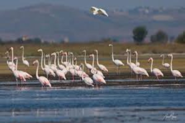 Birds' Census, Klosi: The bird population doubles