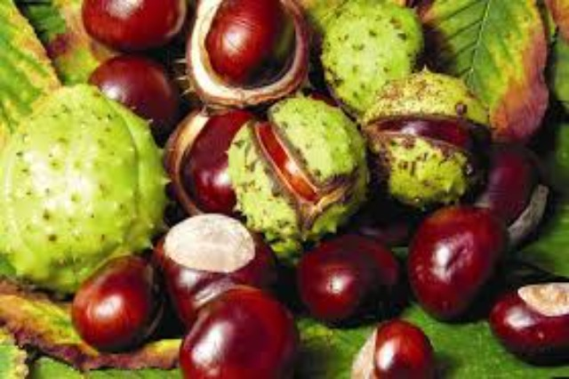 Albania 9th in the world for chestnut exports, potential for profit growth in the Northern areas