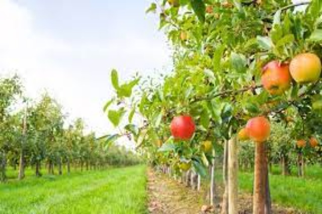 Agricultural production in Albania has 38% higher costs  than the regional average