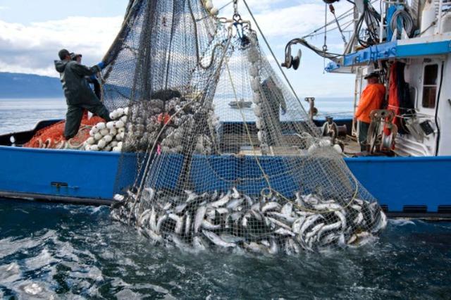 Industria ittica, investimenti ed esportazioni in crescita progressiva parallelamente
