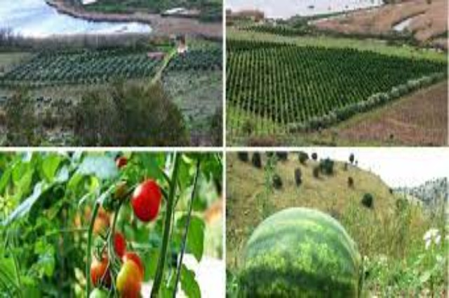 INSTAT postponed the Census of Agriculture to 2024, which was originally scheduled to take place in 2022.