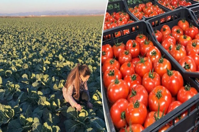 Albanian market/ Agricultural exports increase with 8% in the first quarter