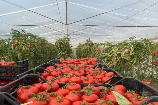 Most of Albania exports travel to European markets