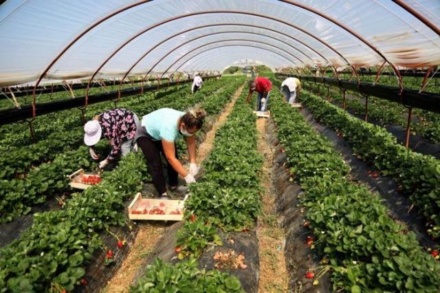 Erhöhung der Beschäftigung in der Landwirtschaft um 20 % in den ersten 6 Monaten des Jahres