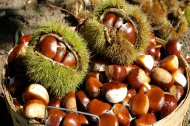 Tropoja chestnuts in high demand in the international market
